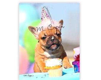 Happy Birthday  - French Bulldog Cards - Set of 2 Cards