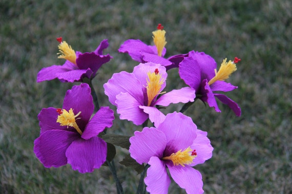 my favorite flower essays My favourite flower rose essay in hindi click to continue ap world history offers abalanced global approach, focusing on africa, the world: a global.