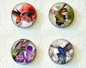 Magnet Set  Hummingbirds Buy 3 Get 1 Free 208-MS
