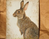 Original Watercolour Painting of a Rabbit REDUCED PRICE