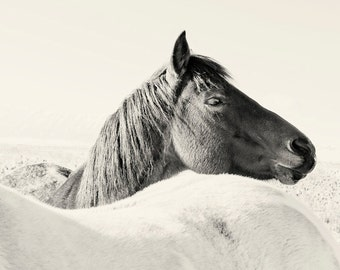 Black and White Photography of Horses, Nature Wall Art, Equestrian Horses in Art