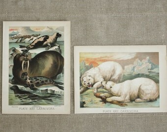 2 Antique 1880 Animal Prints from Mammalia by Henry J. Johnson