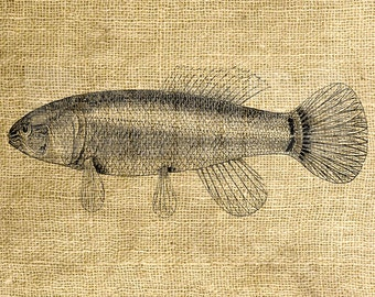 INSTANT DOWNLOAD - Vintage Fish Illustration - Download and Print - Image Transfer - Digital Sheet by Room29 - Sheet no. 984