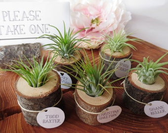 50 Wood and Airplant Wedding Favors/Place Card Holders - Bulk Rate