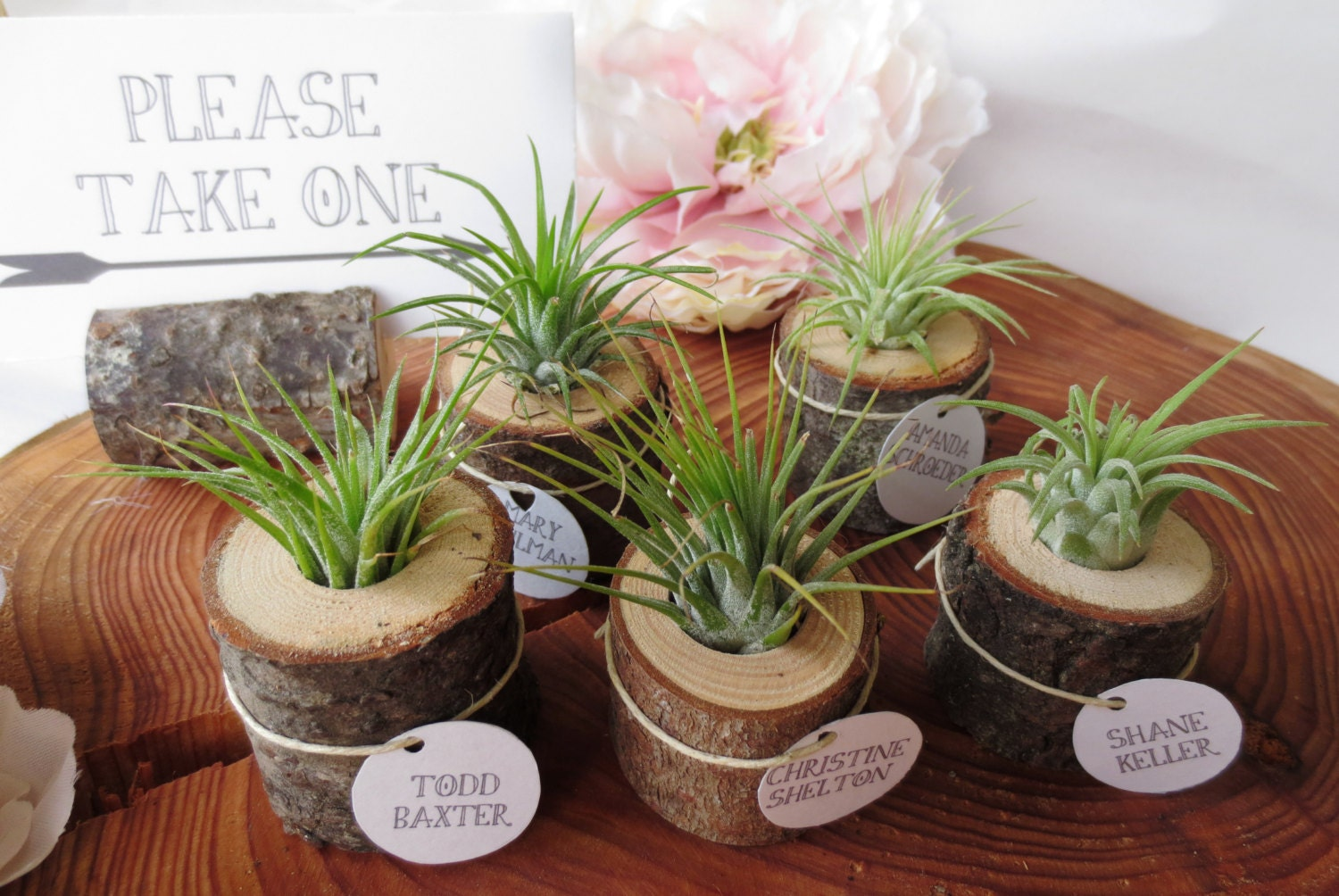 Items Similar To Wood And Airplant Wedding FavorsPlace
