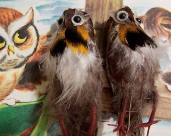 feather owls and birds