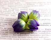 Flower beads - purple, turquoise blue and wassabe green flower tulips buds polymer clay - 4 pcs