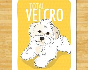 White Havanese Art Print - Total Velcro - Havanese Gifts Dog Breed Art
