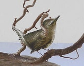 Visit of the Wrens, tiny sewn fabric printed birds on natural dried willow branches