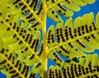 Westonbirt Autumn 4 - Fine Art Photography - Wall Décor - Nature Photography