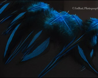 Bright Blue Feathers Bright Craft Feather Supplies Blue Craft Feathers Blue and Black Feathers for Crafts Caribbean Blue Laced Rooster, 12