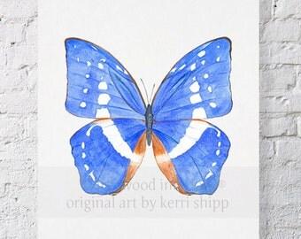 Butterfly in Cobalt Blue Watercolor Print 8x10 - Butterfly Art Print - Natural Curiosities Print - Butterfly Specimen Art