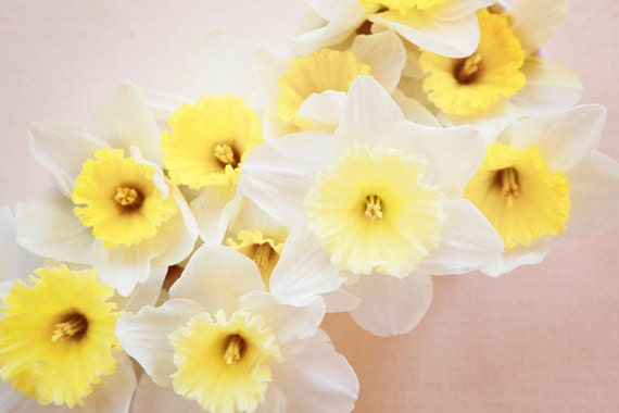Daffodil Photograph - Fine Art Photography, spring, yellow, cream, white, flower photo, nature, floral, shabby, wall art, print, home decor