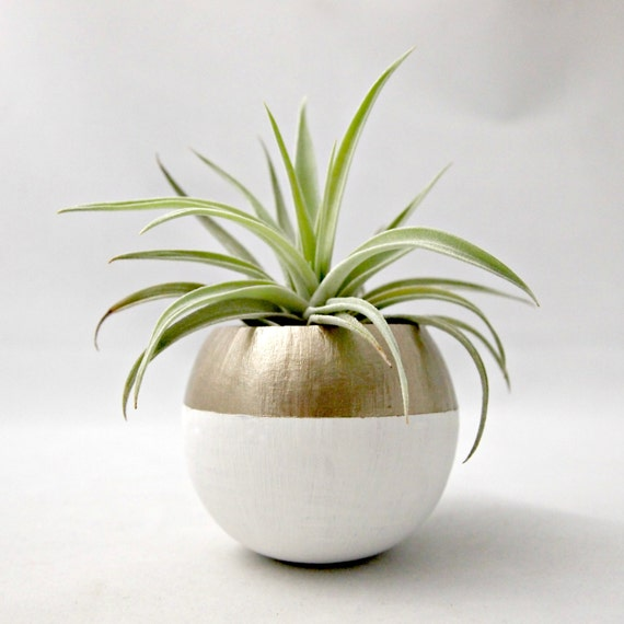 Air Plant Pod // Mini Gold Colorblock Air Plant Pot (with Air Plant)