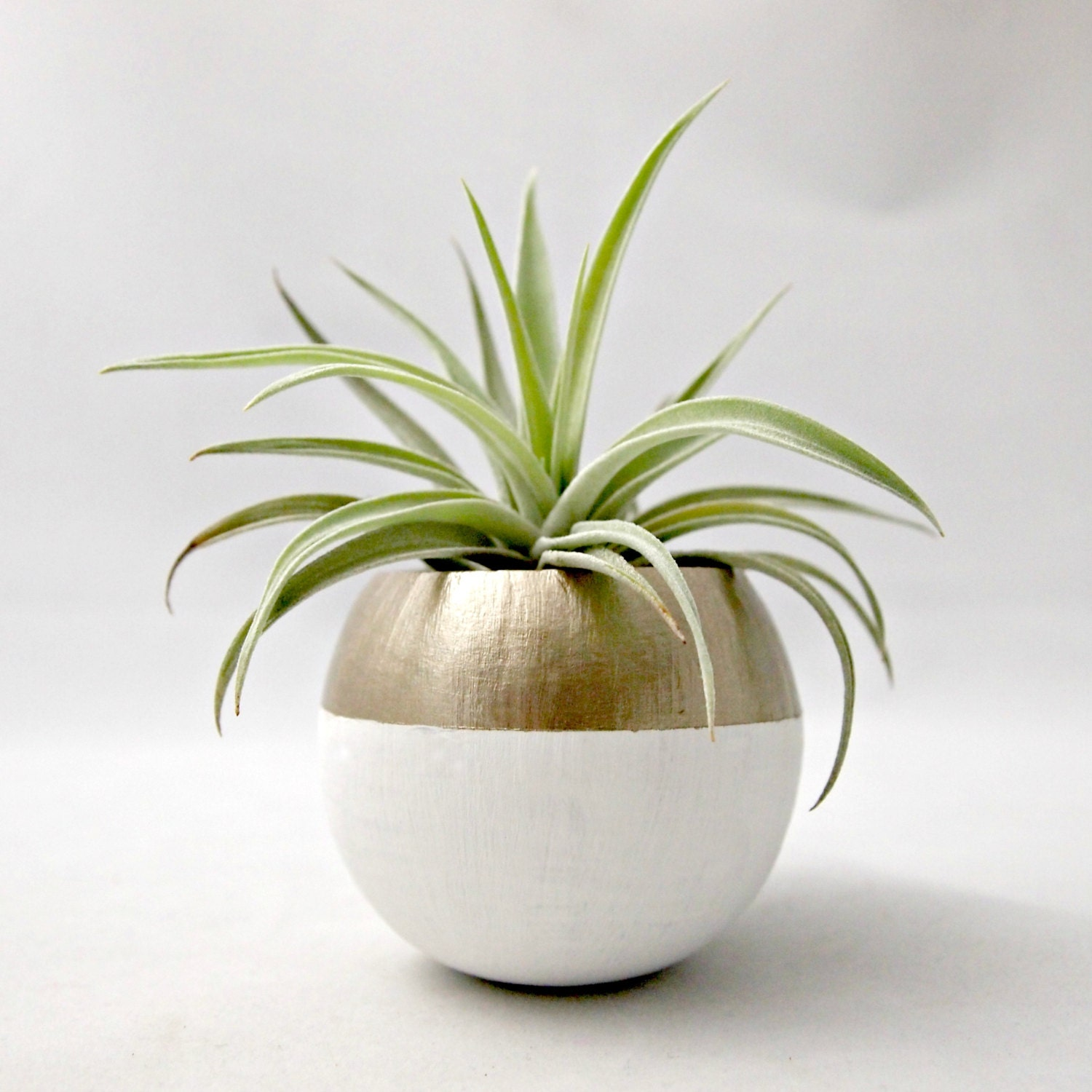 air plant pod mini gold colorblock air plant pot with air. Black Bedroom Furniture Sets. Home Design Ideas
