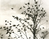 detail, Fly Away, etching, warm sepia tone