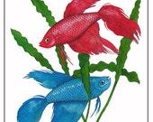 "10"" x 8"" Watercolor Art Print Illustration Siamese Fighting Fish Blue Red Nature Wildlife Art"