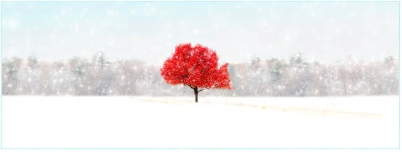 SET OF 4,nature photography, Snow, Autumn, Red, White, Tree serene, peaceful, winter,  Greeting Card Note Card Blank Inside