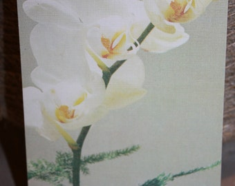 Greeting Card with Orchid  - Gorgeous Postcard