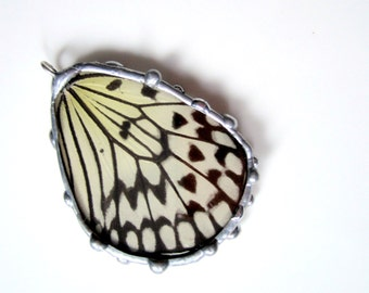 Real Butterfly Wing Jewelry, Rice Paper Kite Butterfly, Idea leuconoe, Bottom Wing