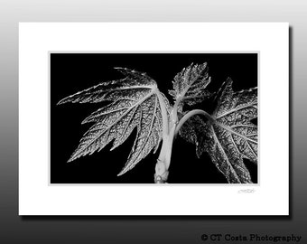 Abstract Leaf Print, Matted Print, Black and White, Macro Nature photo, Ready for framing