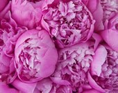 Pink Peonies, Flower Photograph, Peony, Pink, Peonies, Bouquet, Home Decor, Spring, Fine Art, Wall Art, Flower Photography, Pink Peony