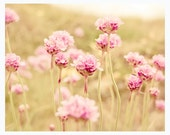 Dreamy nature photography, pastel pink flowers, 8x10 wall decor, shabby chic, light green grass, meadow, rustic - Sun Flared - MyMonography