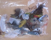 Miscellaneous Bag of Distressed Feathers 1