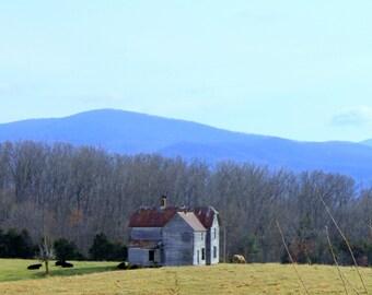 Old Farmhouse with Cattle, Shenandoah Valley, Blue Ridge Mountains of VA--8 x 10 fine art photo, signed
