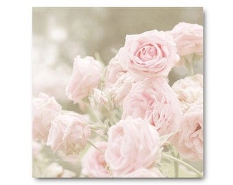 Pink Rose Photography, shabby chic, baby pink roses, soft, sage, moss green, antique, heirloom roses, soft pink photo, valentine
