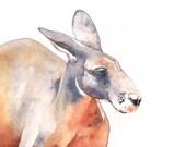 Kangaroo watercolor painting- K089 print of Watercolor Painting 5 by 7 print