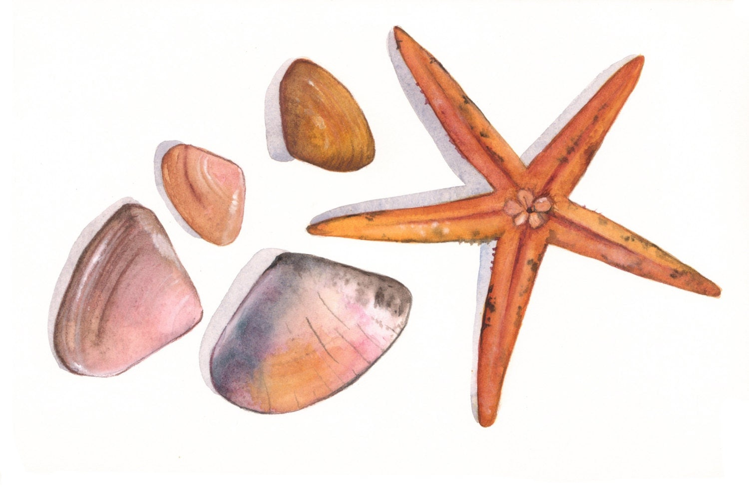 Seashell Home Decor Starfish And Seashell Watercolor Painting Print Of