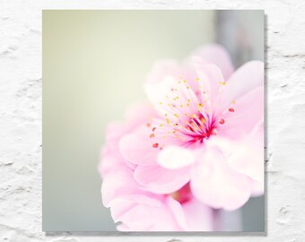 pink blossom photo fine art photography flower photograph square wall decor soft feminine pretty