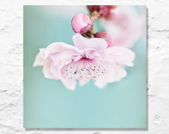 blossom photograph nature fine art photography flower photo aqua blue pink spring pastel color feminine wall decor nursery art baby