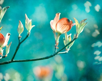"Teal Photography - orange peach teal decor flower aqua blue green turquoise print floral botanical wall art - 8x8 Photograph, ""Enchanting"""