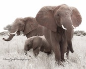 THREE ELEPHANTS photo ,Wildlife Photography, African animals, Wall Art, Safari animals, Elephant, Jungle animals, nature photography