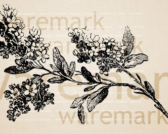 Lilac Flowering Branch  -  Digital Image Download Sheet, Transfer To Pillows ,Burlap Bag, or Print on paper, No 237