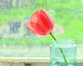 Photo Red Tulip Fleur  Ball Green Vintage Glass Shabby Chic Cottage Decor Wall Fine Art  Karen A Webb Photography