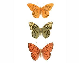 Butterfly Orange Yellow Green Vintage Style Natural History Art Print