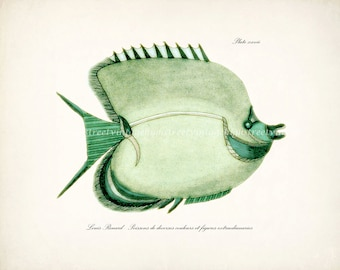 Fish of the Coral Reefs Illustration - Natural History Wall Decor Print  Sea Grass