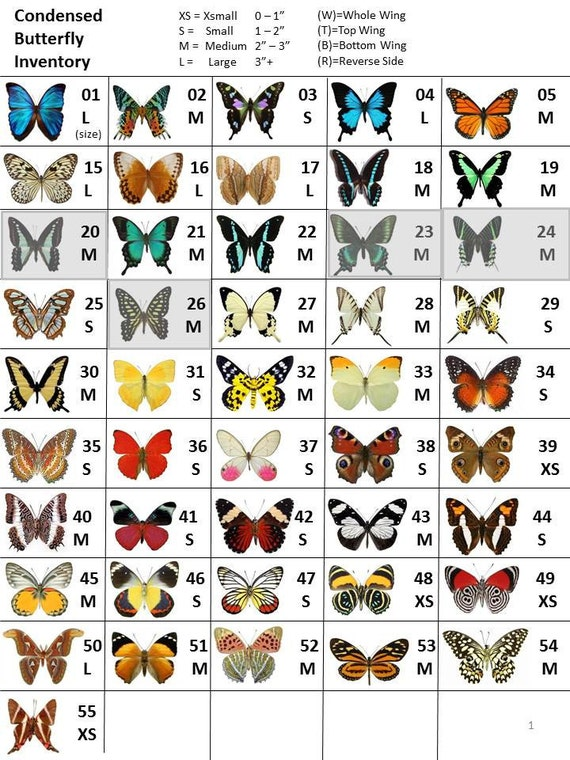 Custom Butterfly Listing - Butterfly Wings for Crafting