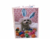 Miniature Toy Poodle Easter Card, Bunny Easter Card