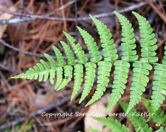 "Autumn Fern - Flora Fine Art Photograph - 8 x 10"" - Nature Decor"