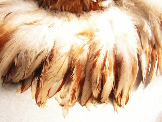Indian Spice rooster feathers , bulk, lot, wholesale, feather supply