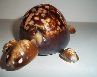 Cowrie Shell Turtle