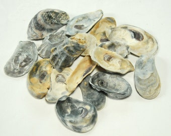 Craft Shells, 15 Oyster Shell Seashells, DIY Beach Theme Wedding Decor, Bulk Sea Shell Supplies, All Things Coastal Nautical Decorations