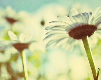 daisy's, flowers, summer, blue, green, white, fine art photography