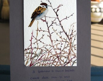 ACEO Limited Edition 2/25 - A sparrow in thorn bushes