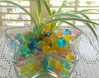 Star Glass Dish Live Spider plant with crystal Gel Water Beads
