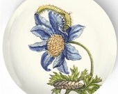 1600's botanical artwork II melamine plate